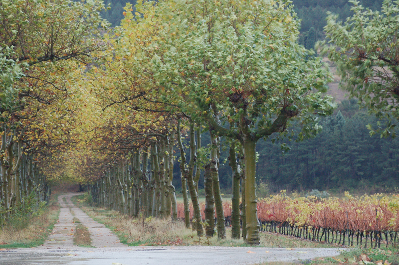 camino Bodega Otazu